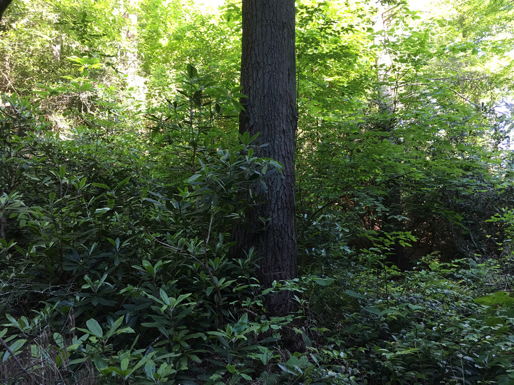 Image 5 for None Us 25 70 Highway in Hot Springs, North Carolina 28743 - MLS# 3185553